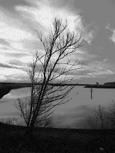 Shelby Farms - Patriot Lake