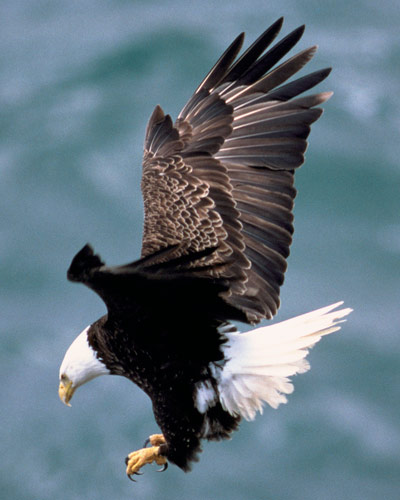 Federal, state officials urge caution as Michigan motorists are hitting bald eagles