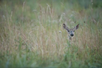 Ohio DNR: Chronic Wasting Disease not detected in Ohio deer