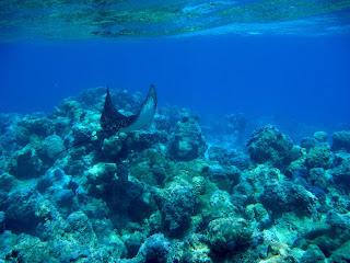 Snorkeling in Huahine