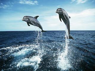 3d dolphin wallpaper 1
