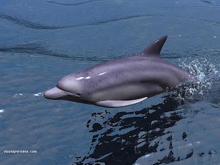 3d dolphin wallpaper 2