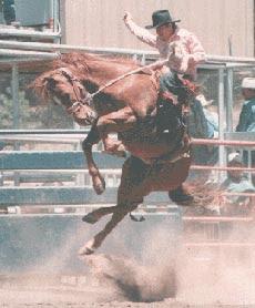 Rodeo gay de cargary 2007