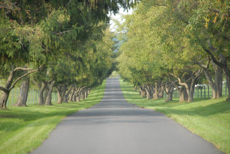Driveway to President Eisenhower's Home & Cattle Ranch