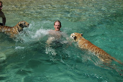 Tigers swiming with their trainer