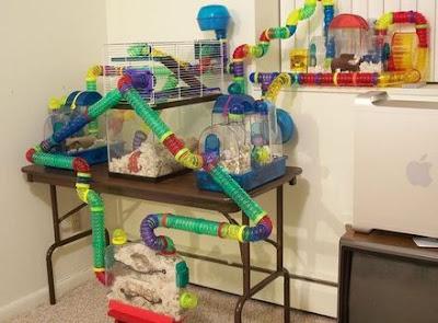 kalau rumah hamster seperti ini bisa pusing kau cari kamar tidurnya hehe
