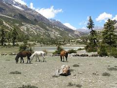 Treks-in-Nepal