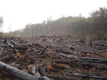 illegal logging Penebangan Hutan Bukit Barisan Resahkan Masyarakat