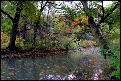 Mary 39 s detroit photoblog nashua creek belle isle for Belle creek