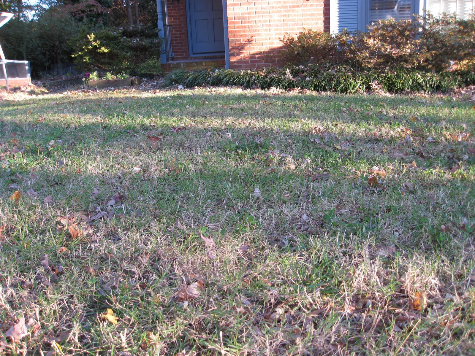 Mowing Leaves Instead Raking