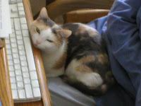 Trixi Kitty