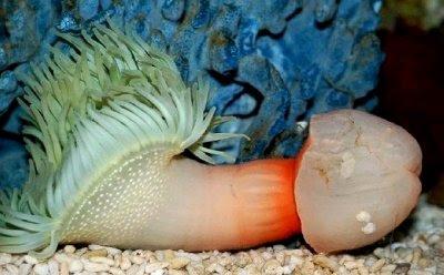 weird sea creature, strange sea animal