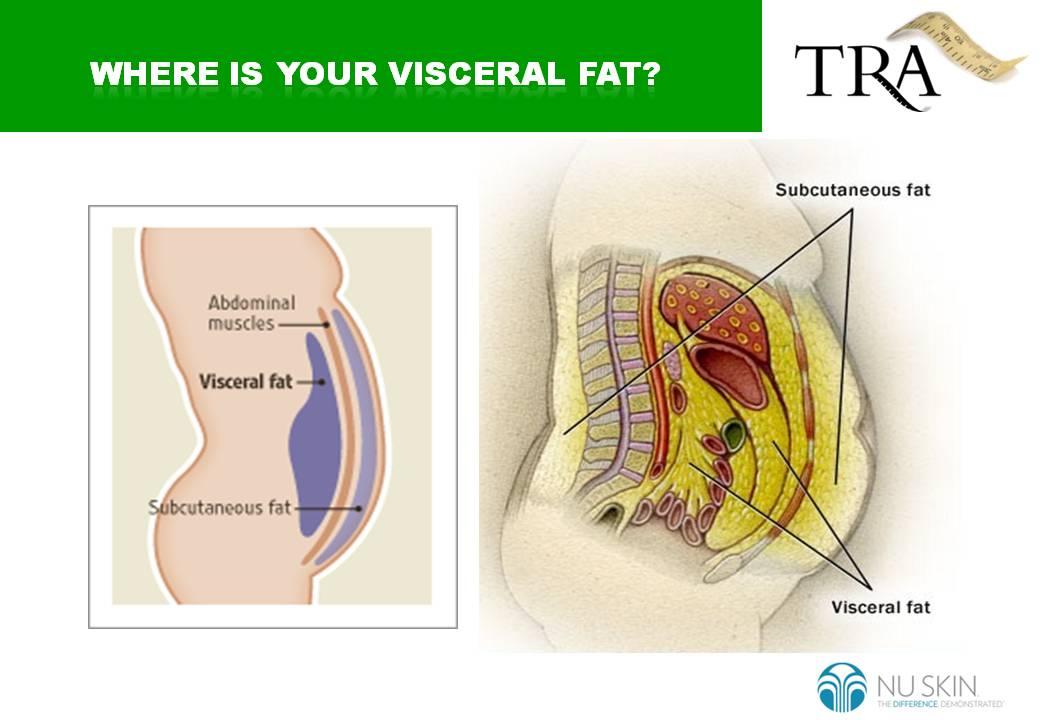Define Visceral Fat 44