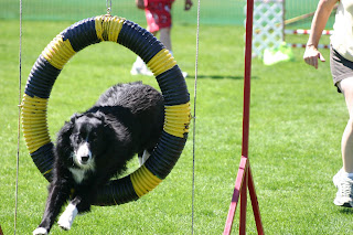 Agility Weekend