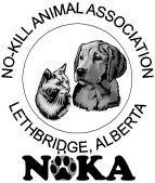 NOKA%2520ONLY%2520LOGO%2520web Off to the vet