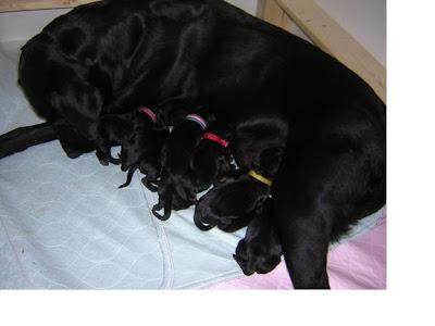Miikka+with+pups Young Pups