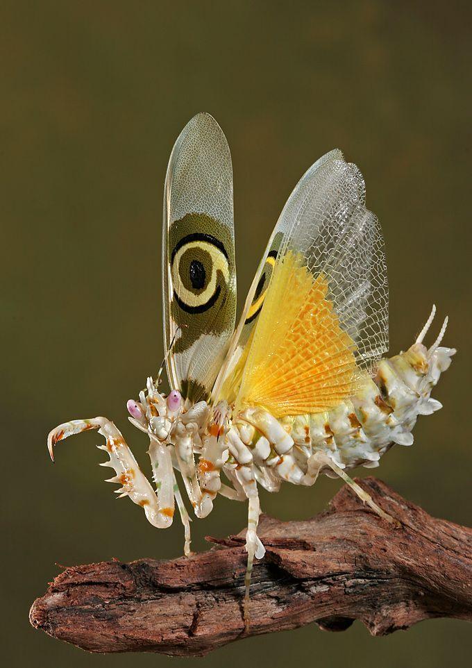 Insectos raros  Taringa