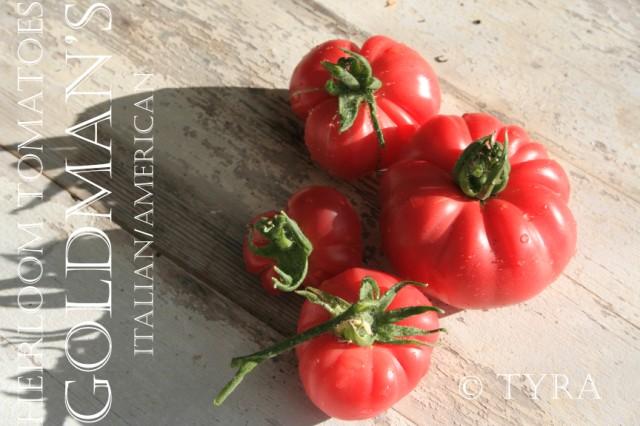 """Heirrloom tomato Goldman's"""