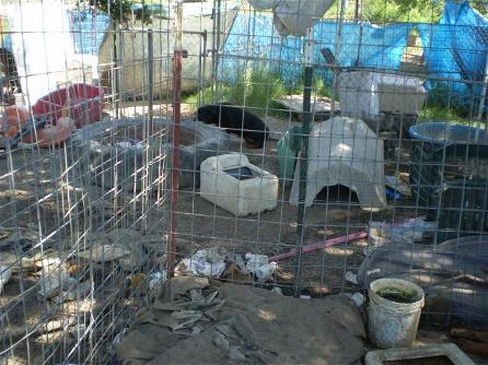 Pontotoc Rottweilers Living Area - BEFORE