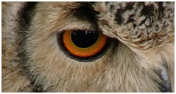 [owl+eye]