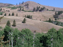 A Hill in South Central Montana