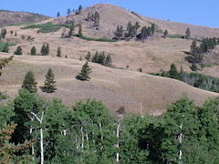 A Hill in South-Central Montana