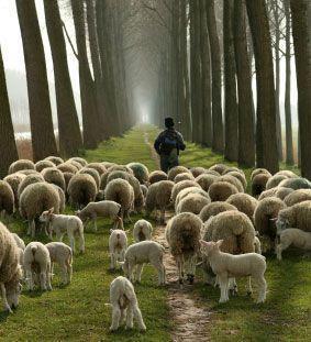 Resultado de imagem para O que não é ser pastor