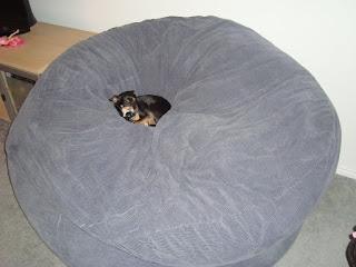 Crystalb: BIGGEST DOG BED EVER!!!