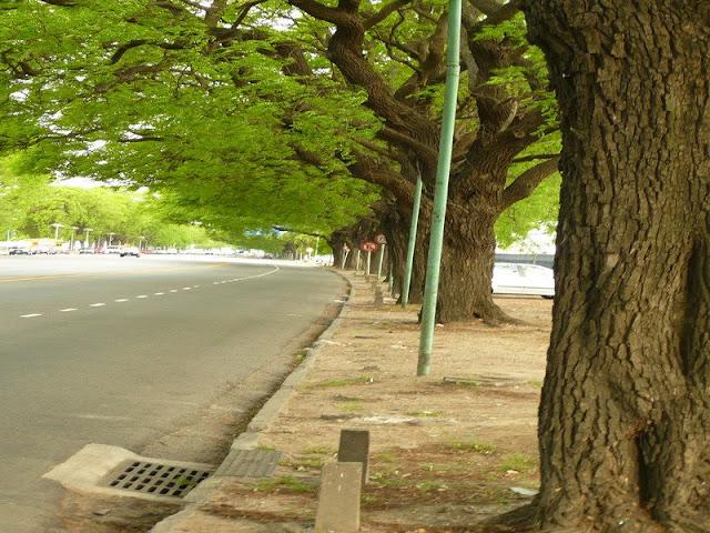 Arboleda y  calle de la Costanera en Buenos Aires.