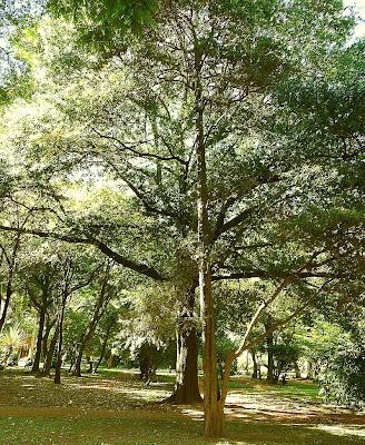 Parque arbolado en la ciudad de Buenos Aires.