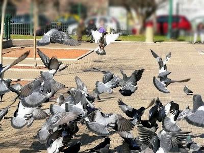 Revoloteo de palomas en una plaza.