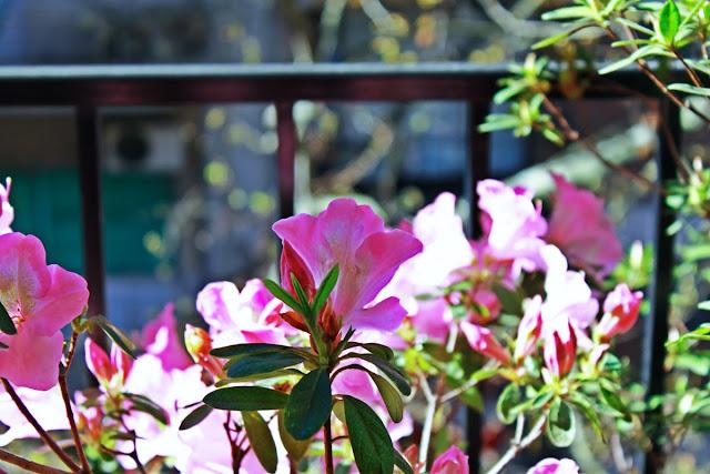 Flores en el balcon.