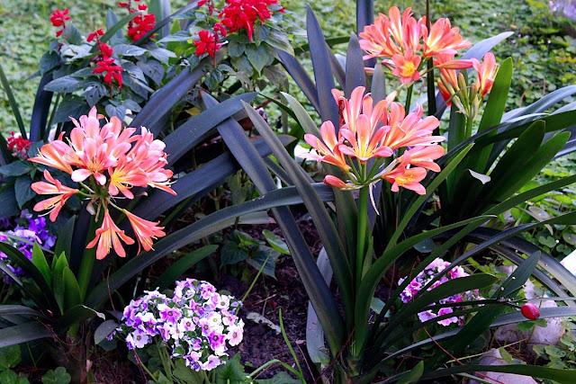 Flores varías en jardín.