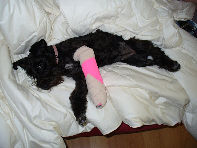 1st broken leg