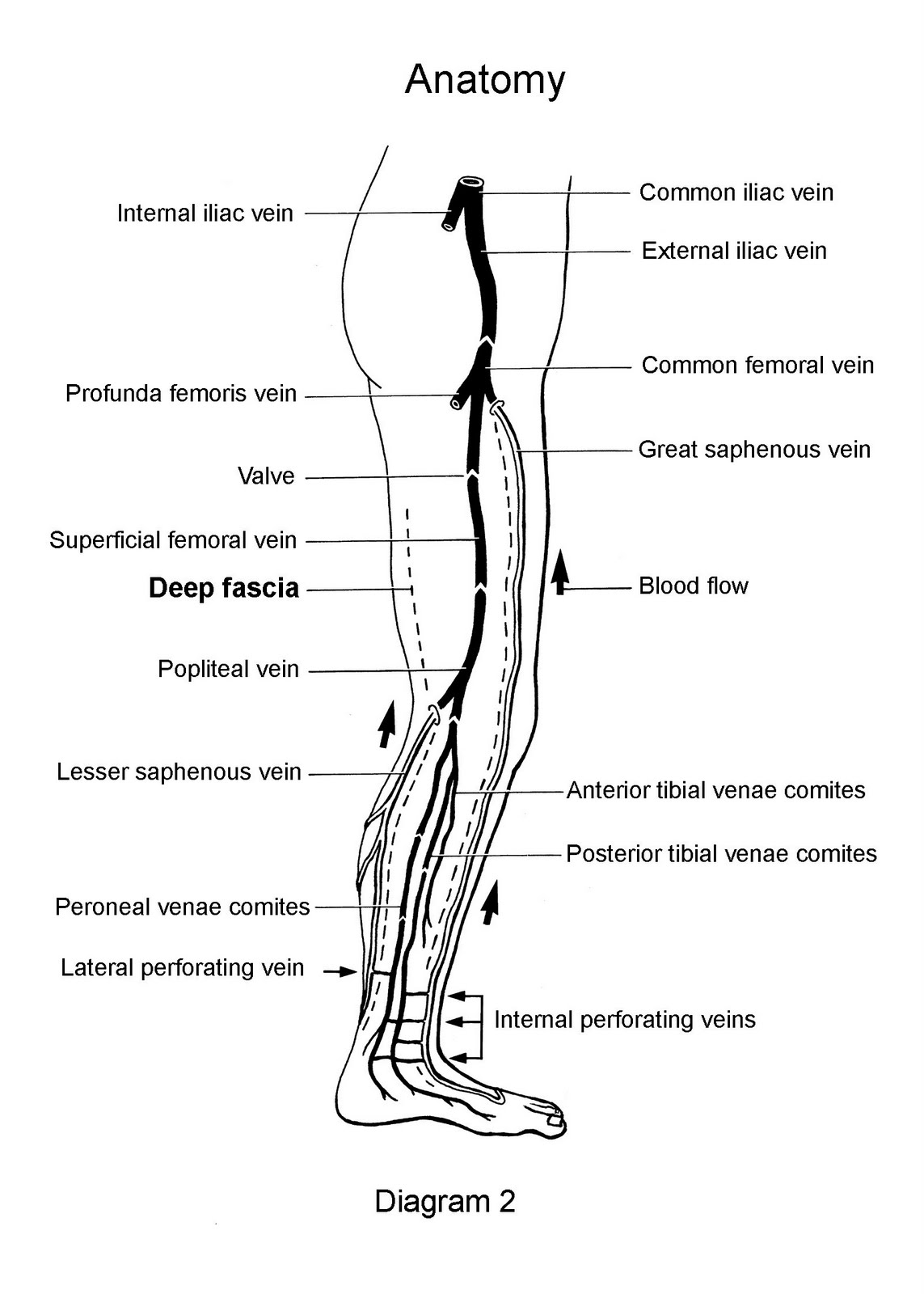 leg venous diagram 2007 honda civic headlight wiring radiologyspirit 2010 07 11