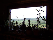 Kitchen window at the farm