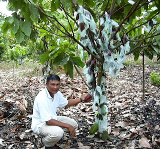 rubber tree farming guide in the philippines