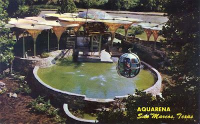 Do Pirhannas Dream Of Diving Pigs Remembering Aquarena Springs