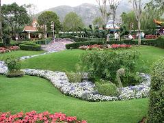 **Dream Garden**