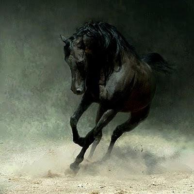 [Cavalo selvagem]