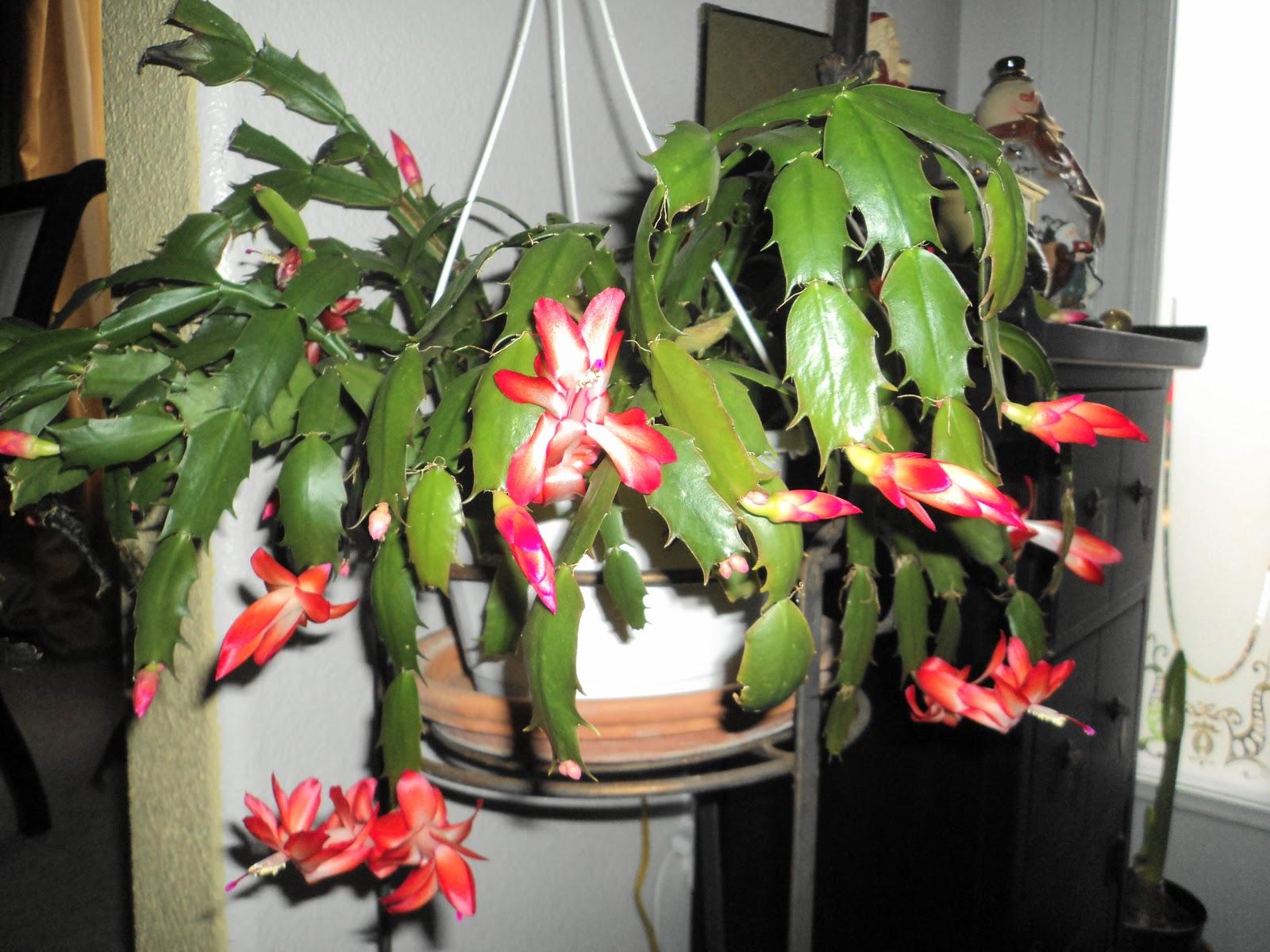 The Gardener December 2010