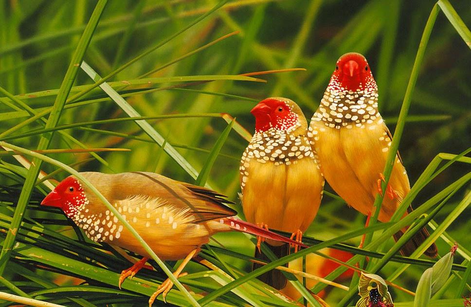 Cute Surya Wallpapers Win Min Beautiful Birds Fish Animals Photography