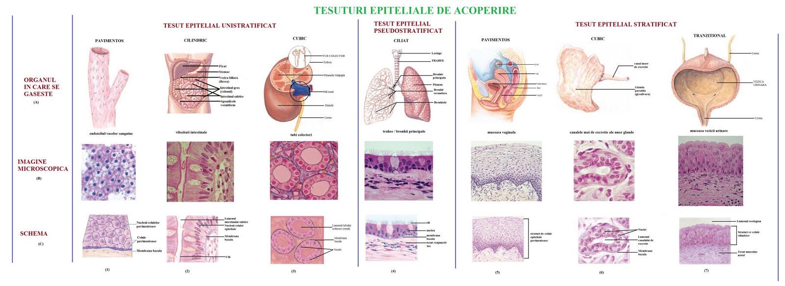 pregătire pentru refacerea țesutului cartilaginos al intervertebralului