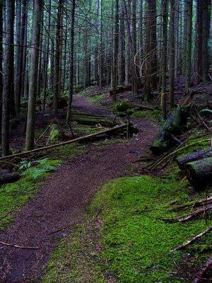 hiking trail, sunshine coast