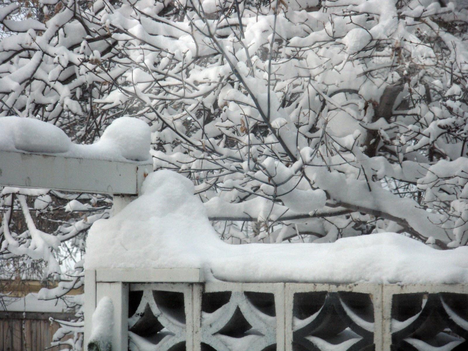 Renaissance Woman Snow