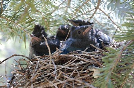 [nest.jpg]