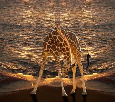 35 espantosas fotos manipuladas por Peter Holme 30