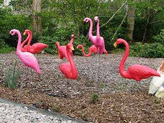 A Flock of Flamingos