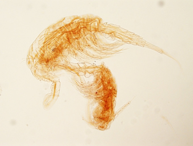 parasite - photo #18