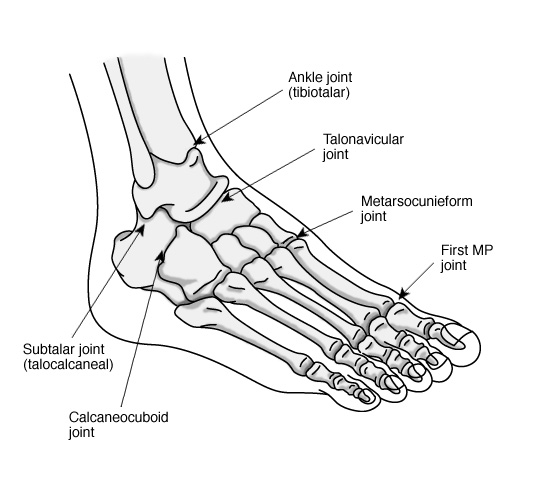 3-D Optimal Performance Guide: Introduction to 3-D Foot